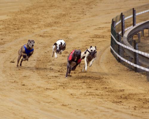 race night dog 7